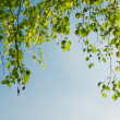 Green foliage branch and blue sky — Stock Photo