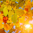 Autumn leaves and sun — Stock Photo