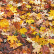 Fallen autumn leaves — Stock Photo #1616704