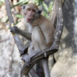 Monkey — Stock Photo #1616949
