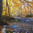 River in autumn forest — Stock Photo #1617018