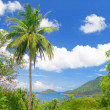 Coconut palm and tropical bay - Stock Photo