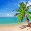 Beach with coconut palm and sea — Stock Photo #1617063