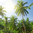 Coconut palm trees and sky with sun — Stock Photo