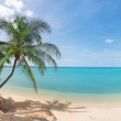 Tropical beach with coconut palm and sea — Stock Photo