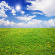 Yellow flowers field under blue cloudy s — Stock Photo