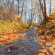 Brook in autumn forest — Stock Photo #1617543