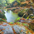 Beautiful river in autumn forest — Stock fotografie