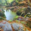 Beautiful river in autumn forest — Stockfoto