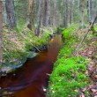 Stream in autumn forest - Photo