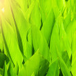 Green grass - Photo