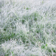 Foto Stock: Frozen grass