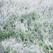 Foto de Stock  : Frozen grass