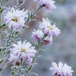 Stock Photo: Frozen flowers