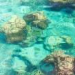 Crystal clear tropical sea - Stock Photo