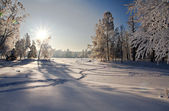 Winter forest in snow — Foto Stock