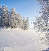 Winter forest and lake — Foto Stock