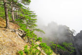 High mountain with pine in clouds — Stock Photo