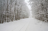 Weg in winter forest — Stockfoto