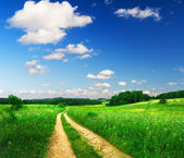 Beautiful summer landscape — Stok fotoğraf