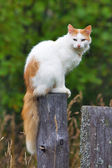 Cat on a fencepost — Stock Photo
