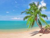 Beach with coconut palm and sea — ストック写真