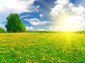 Gelbe Blumen Hügel unter blauen Nebel sk — Stockfoto