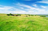 Lake, green grassa and blue sky — Stock Photo