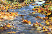 Brook in autumn forest — Stock Photo