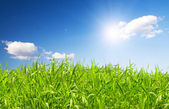 Beautiful green grass under blue sky wit — ストック写真