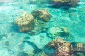 Crystal clear tropical sea — Foto Stock