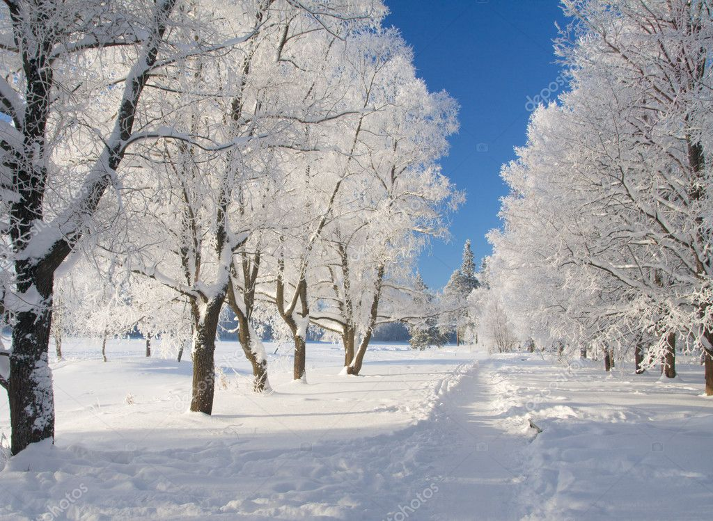 Winter park in snow — Stockfoto #1616103