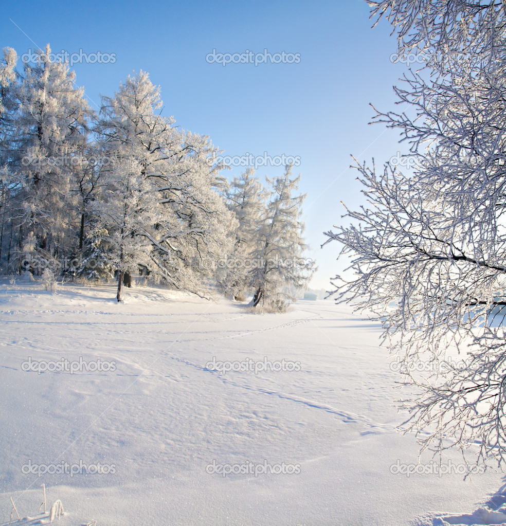 Winter forest and lake — Stock Photo #1616115