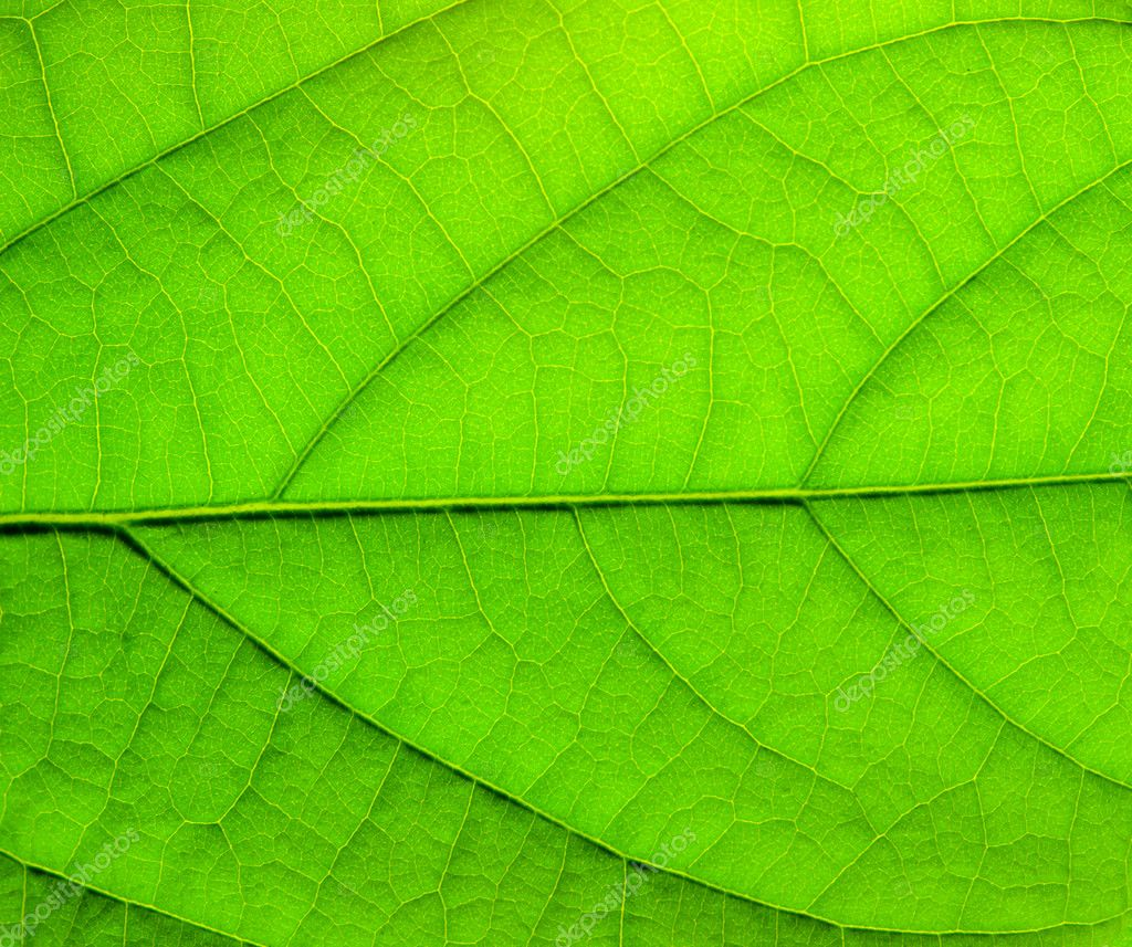 Green leaf structure — Stock Photo #1616664