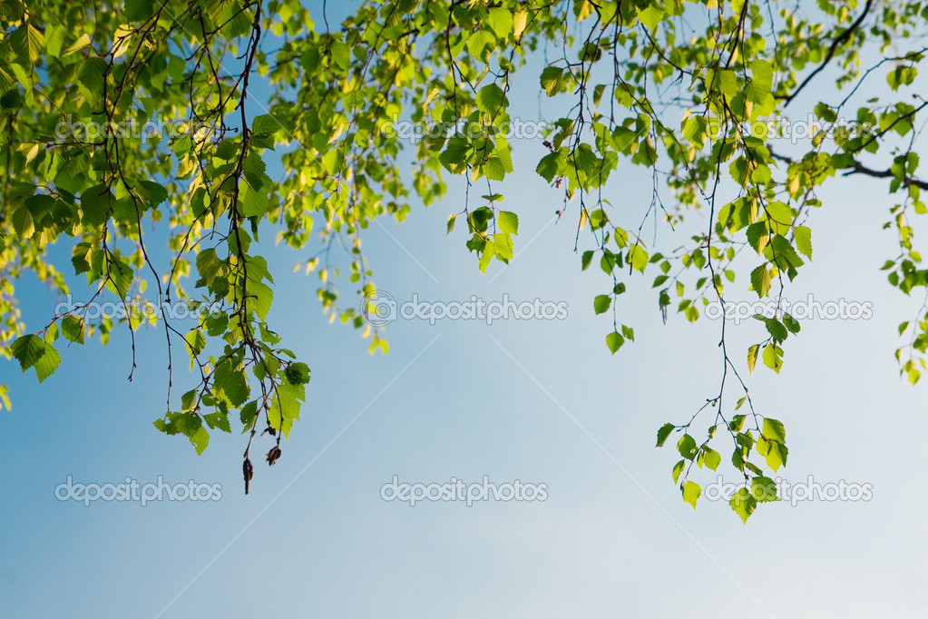 Green foliage branch and blue sky — Stock Photo #1616691
