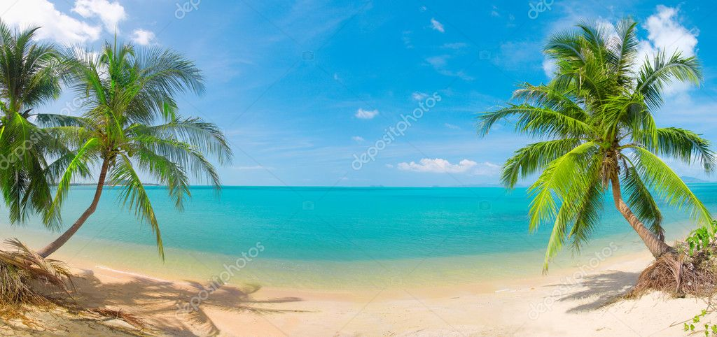 Panoramic tropical beach with coconut palm — Zdjęcie stockowe #1617092