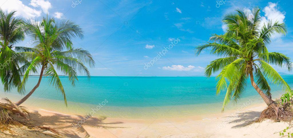 Фотообои Панорамный тропический пляж с кокосовой па