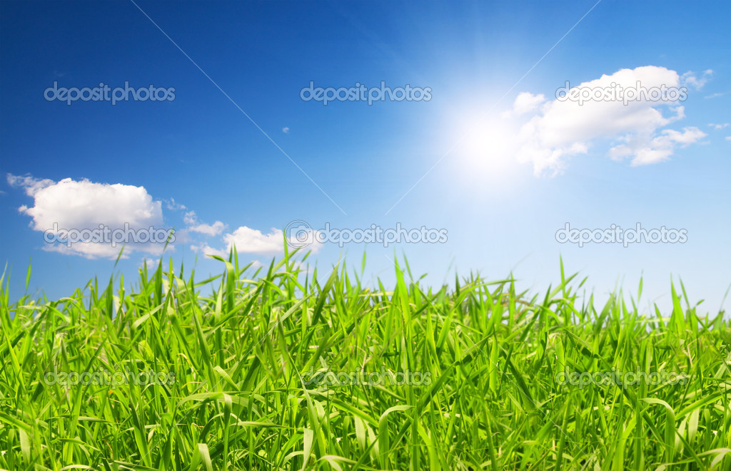 Beautiful green grass under blue sky with sun — Stock Photo #1617675