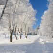 Winter park in snow — Stock Photo #1662744