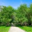 Pathway in green park — Stock Photo #1602466
