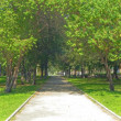 Pathway in green park — Stock Photo #1602471