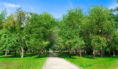 Pathway in green park — Stock Photo