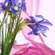 Spring purple flowers irises — Stock Photo
