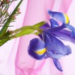 Spring purple flowers irises - Photo