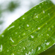 Stock Photo: Green fresh leaf on dew