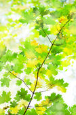 Clean green leaves — Stock Photo