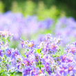 Stock Photo: Early summer flowering
