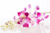 Orquídea. isolamento — Foto Stock