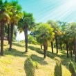 Palm tree — Stockfoto #2256809