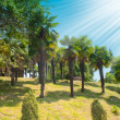 Palm tree — Stockfoto #2256811